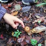 Child Touching Mushroom