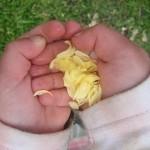 Petals in Child Hands